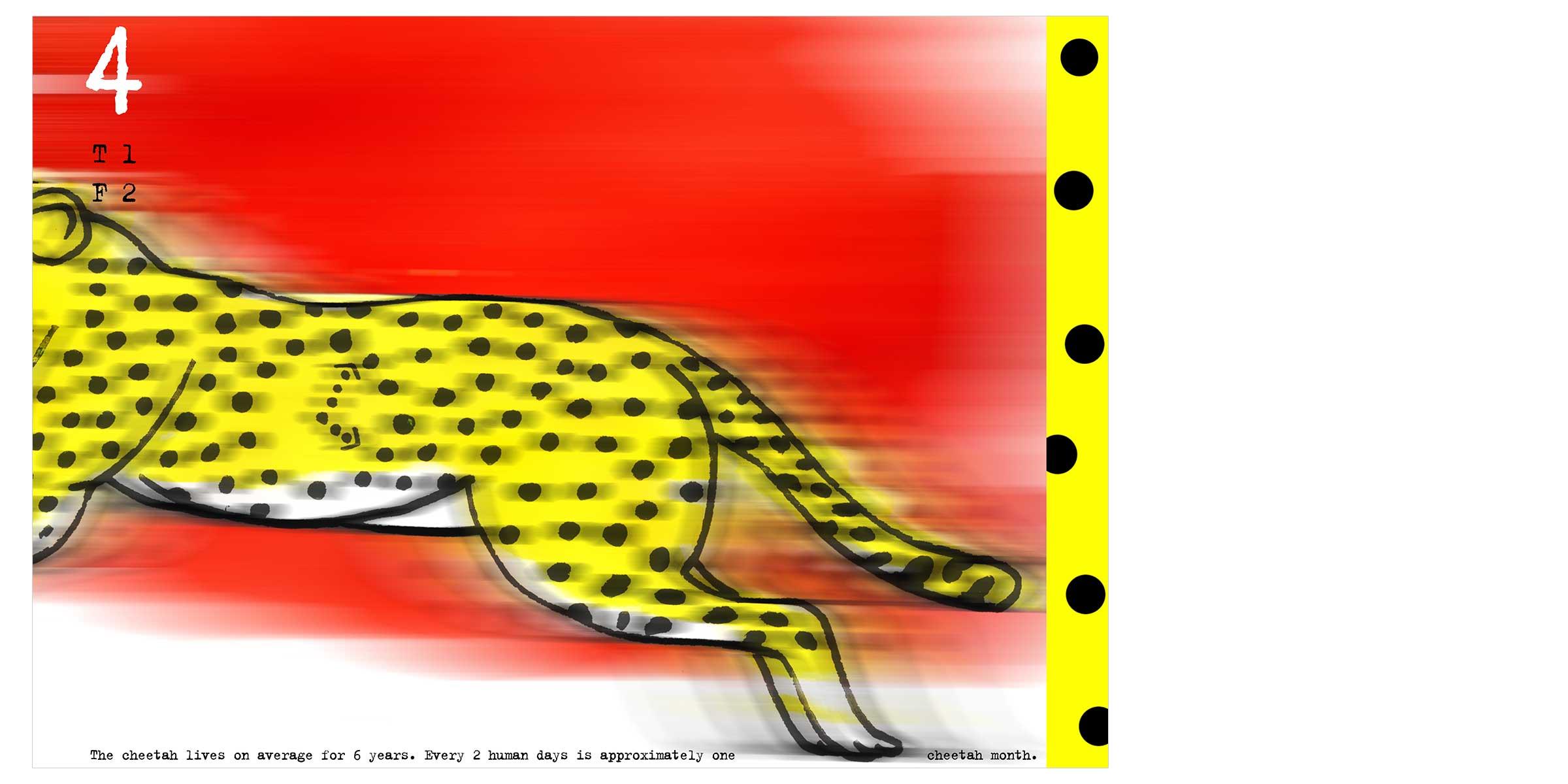 MMI-AC-cheetah